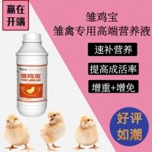 雏鸡宝,高端雏鸡专用营养液,让鸡赢在起跑线上!